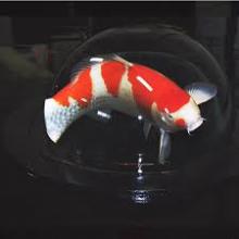 Fish Globe