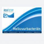 Melkzuurbacterien